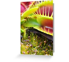 Fly Catcher One Greeting Card