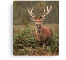 Majestic Red Stag Canvas Print