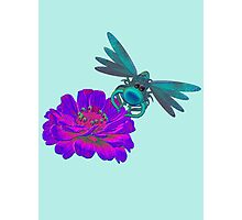Cute Dragonfly On Pink Zinnia Flower Photographic Print