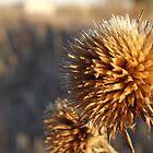 Sunflower by Dan Seeley