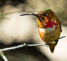 What do you want?. Nectar!! by sgshutter
