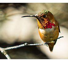 What do you want?. Nectar!! Photographic Print