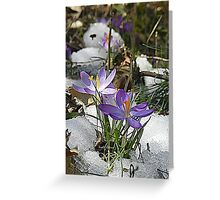 Crocus Flowers in the Snow Greeting Card
