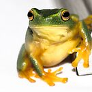 Frog on Frame Corner by Donna Rondeau