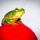 Frog on Red Ball by Donna Rondeau