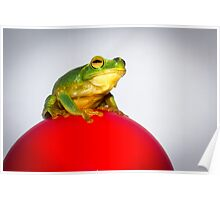 Frog on Red Ball Poster