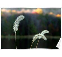 Autumn Lakeside Tall Grass Poster