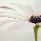 daisy ... by karenanderson