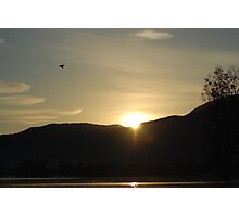 Sunrise with Pelican Photographic Print