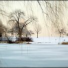 Winter © by Dawn M. Becker