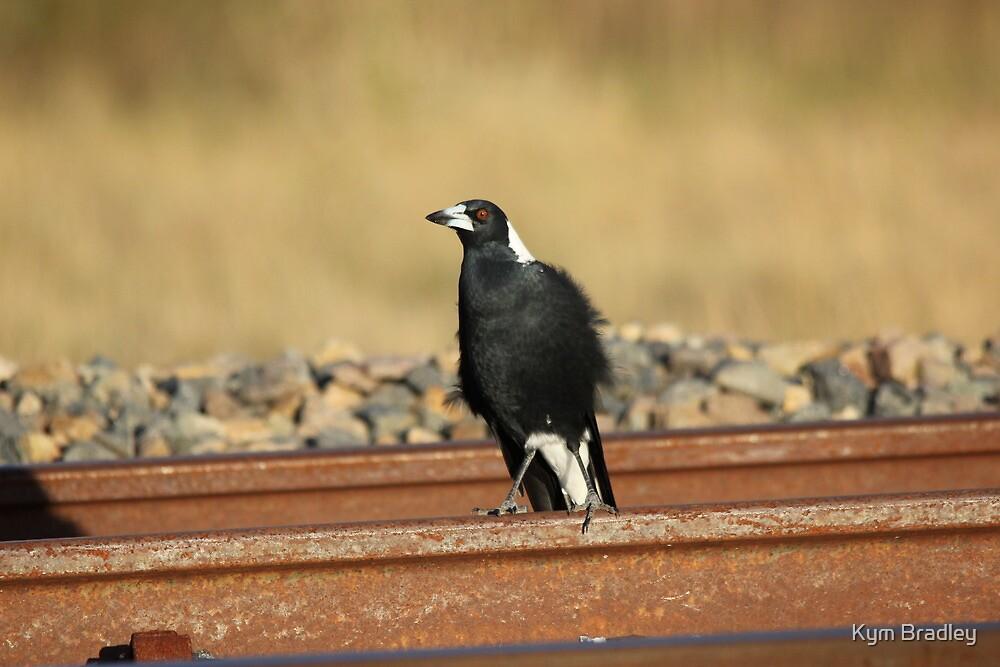 Walk the Line  Magpie on Railway Line  by Kym Bradley