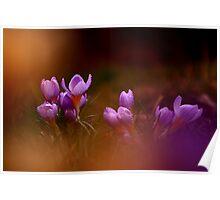 Photo of beautiful wild flowers Poster