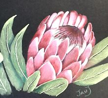'Protea' by jansimpressions