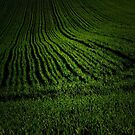 Green acre by Patrick Reinquin