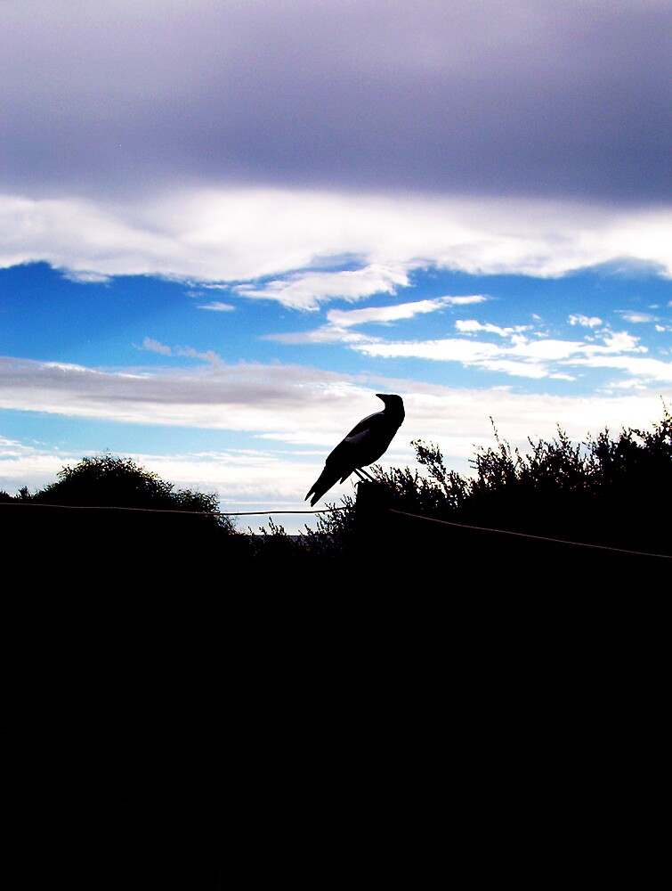Magpie  -  10 03 13 by Robert Phillips