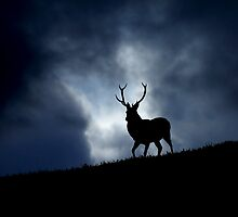 Stag silhouette by Macrae images