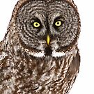 Who gives A Hoot by Tim Denny