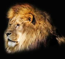 Lion's Gaze... by Chris Kean