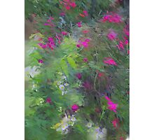 Expression  Of Impressionism  Photographic Print