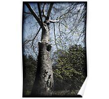 Hoya Tree Poster