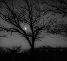 la luna e l albero by ventofreddo