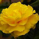 Single Yellow Rose by Mary Carol Story