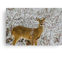 Natural Beauty 5 Canvas Print