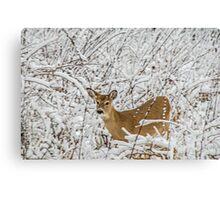Natural Beauty 2 Canvas Print