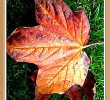 Autumn in Dalgety Bay by Sara-Jane  Keeley
