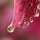 Dahlia Drops by Lynn Gedeon