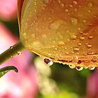 Tulip Jewels by Lynn Gedeon