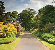Garden Path by Norma Cornes