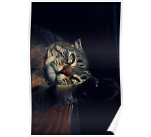 Wildcat Impression Poster