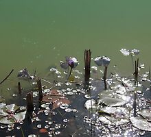 Water Lillies by PrettyLilly