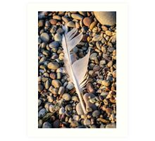 Feather on the Rocks Art Print