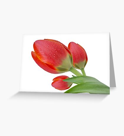 Tulips Greeting Card Greeting Card