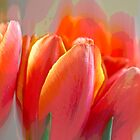 Abstract Tulips by Mariola Szeliga