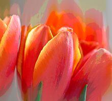 Abstract Tulips by Mariola Szeliga