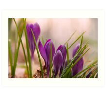 Crocus from a bugs point of view Art Print