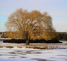 winter Landscape by jkartlife