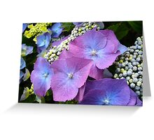 Blue/Lilac Hydrangeas Blooming Greeting Card