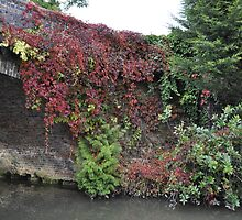 Landscape Red Ivy by Robbie Patterson