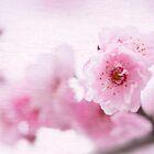 ピンクの花 by imagejournal