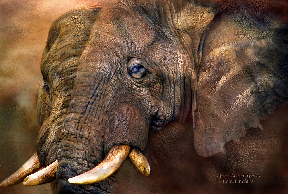 Africa - Ancient Giants by Carol  Cavalaris