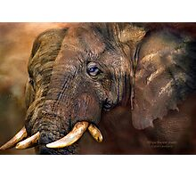 Africa - Ancient Giants Photographic Print