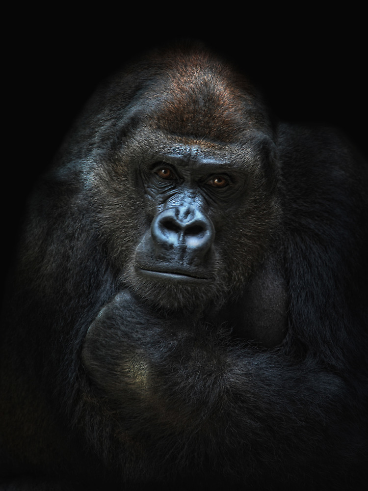 she-gorilla by Jo-PinX