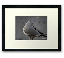 Black Headed Gull P1010189 Framed Print