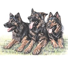 German Shepherd Dogs Photographic Print
