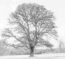 Oak over Oxford by Andy Burke