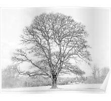 Oak over Oxford Poster